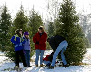 Start your own family tradition to pick your own Christmas trees at Big Tree Plantation, Morrow, Ohio, NE of Cincinnati