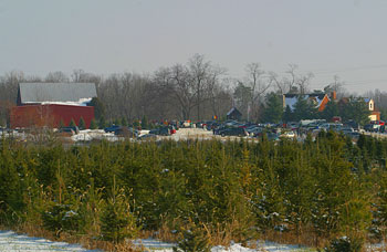 Start your own family tradition when you pick your own Christmas trees at Big Tree Plantation, Morrow, Ohio, NE of Cincinnati.